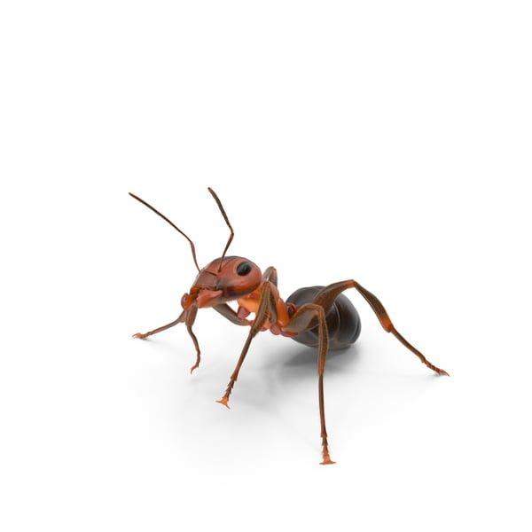 Oudourous house ant 1